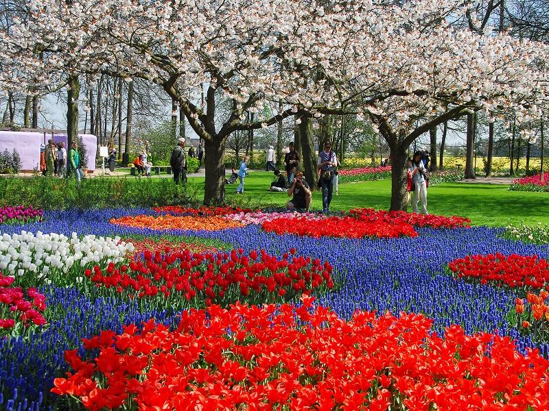 Holland med Blomstertåget